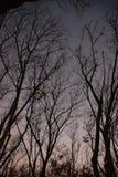 La rama de la silueta antes del sol abajo Fotografía de archivo libre de regalías