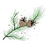 La rama de los conos de la picea y del pino Ilustración del vector Día de fiesta del Año Nuevo Ilustración del Vector