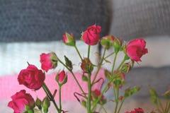 La rama de rosas rosadas Imagen de archivo libre de regalías