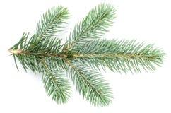 La rama de un árbol de navidad está en un blanco imagen de archivo