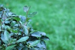 La rama de un arbusto Imagenes de archivo
