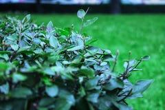 La rama de un arbusto Foto de archivo libre de regalías