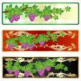 La rama de uvas Imagen de archivo libre de regalías