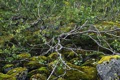 La rama en las rocas Imagen de archivo libre de regalías