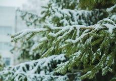 La rama se cubre con nieve imagen de archivo