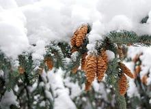 La ramificación de la piel, con el pez gordo, traído por la nieve. Fotografía de archivo libre de regalías