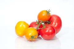 La ramificación de los tomates de cereza Fotos de archivo libres de regalías