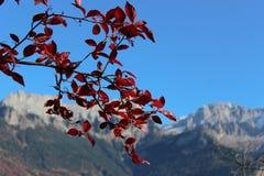 La ramita con las hojas del rojo contra la perspectiva de las montañas Imágenes de archivo libres de regalías