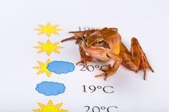 La rana come profeta del tempo formula le previsioni del tempo, versione universale Immagini Stock Libere da Diritti