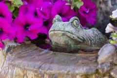 La rana decorativa adorna una fuente en la cual el Pelargonium crezca foto de archivo libre de regalías