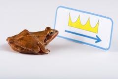 La rana di primavera che scopre un segno, quel mostra il modo alla corona Immagini Stock Libere da Diritti
