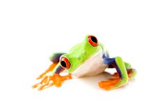 La rana es curiosa imagen de archivo
