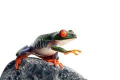 La rana está oculta Fotos de archivo libres de regalías