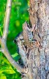 La rana ha preso un insetto che si siede su un albero fotografie stock libere da diritti