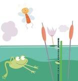 La rana nel raggruppamento Fotografia Stock