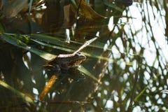 La rana se sienta en las precipitaciones Imágenes de archivo libres de regalías