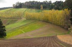 La rangée des arbres de peuplier dans le Dandenong s'étend Photo stock