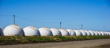 La rangée des maisons en plastique blanches sous forme de boule, élevage de la jeune laiterie met bas dans la crèche Photographie stock