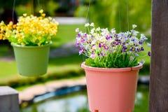 La rangée des pots de fleur accrochants a fait à forme la décoration en plastique dedans se surpasser Photo stock