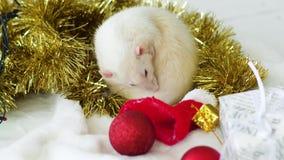 La rata blanca se lava cerca de la guirnalda y de los juguetes de la Navidad almacen de metraje de vídeo