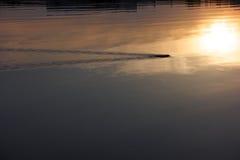 La rata está nadando en el río fotografía de archivo libre de regalías
