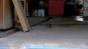 La rata grande funciona con el camino en el mercado del ultramarinos Cámara lenta Asia, Tailandia almacen de metraje de vídeo