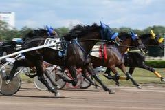 La raza del trotón de los caballos en la falta de definición del extracto del movimiento Imagenes de archivo