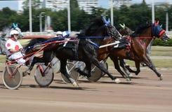 La raza del trotón de los caballos en la falta de definición del extracto del movimiento Imágenes de archivo libres de regalías