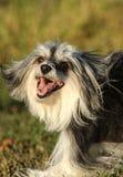 La raza desconocida del perro es cheerfull y presentación fotografía de archivo libre de regalías