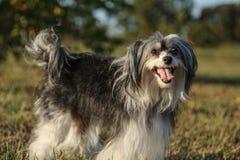 La raza desconocida del perro es cheerfull y presentación fotografía de archivo