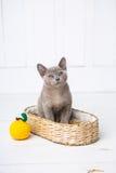 la raza gris del gatito, el birmano se está sentando en una cesta de mimbre Juguete siguiente hecho a ganchillo bajo la forma de  Imágenes de archivo libres de regalías