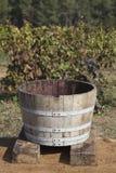 La récolte de raisin Photographie stock libre de droits