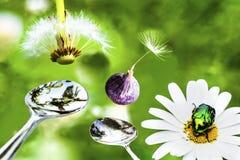 La realtà non vista: Natura sana - alimento sano Fotografie Stock