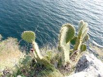 La recherche de cactus l'eau Images stock