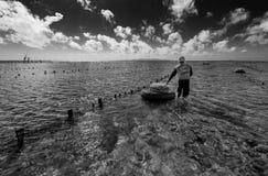 La recogida indonesia del granjero crece algas marinas en una cesta de su granja del mar, Nusa Penida, Indonesia Fotos de archivo