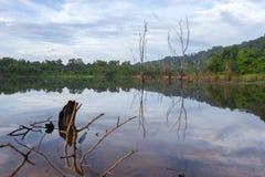 La reflexión con los árboles secos en el lago, en el cielo azul de la mañana Fotos de archivo libres de regalías