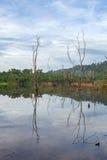 La reflexión con los árboles secos en el lago, en el cielo azul de la mañana Fotografía de archivo libre de regalías
