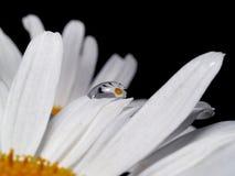 La reflexión de la flor Imagenes de archivo