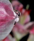 la reflexión de la flor Imagen de archivo