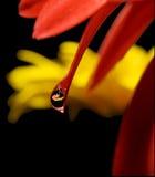 la reflexión de la flor Imagen de archivo libre de regalías