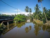 La reflexión del árbol de coco Imagen de archivo libre de regalías