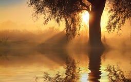 La reflexión de árboles en la orilla en la salida del sol irradia Fotografía de archivo libre de regalías