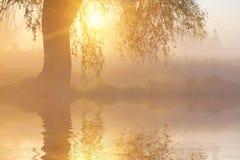 La reflexión de árboles en la orilla en la salida del sol irradia Imagen de archivo libre de regalías