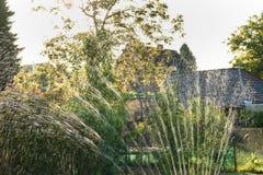La regadera del agua en el jardín produce reflejos de luz durante ocaso Imágenes de archivo libres de regalías