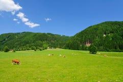 La regione nelle alpi centrali austriache Fotografia Stock