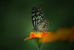 La reina de la flor Imagenes de archivo