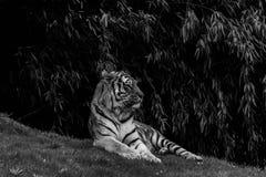 La reine en noir et blanc Photos stock