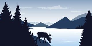 La renna sta bevendo dal paesaggio della natura della fauna selvatica del fiume illustrazione vettoriale