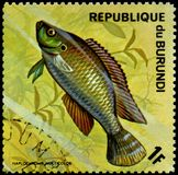LA REPUBBLICA DEL BURUNDI - CIRCA 1974: il francobollo, stampato nel Burundi, mostra ad un Egiziano del pesce il haplochromis di  Fotografia Stock Libera da Diritti