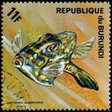 LA REPUBBLICA DEL BURUNDI - CIRCA 1974: il francobollo, stampato nel Burundi, mostra ad un Lactophrys del Cowfish scarabocchiato  Immagini Stock Libere da Diritti
